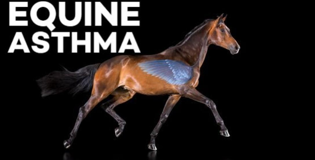Live-webinar-on-Equine-asthma-with-Scott-Pirie